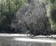Imagini Delta Dunarii 42