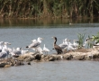 Imagini Delta Dunarii 22