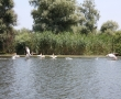 Imagini Delta Dunarii 49