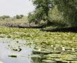 Imagini Delta Dunarii 32
