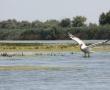 Imagini Delta Dunarii 23