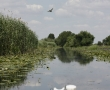 Imagini Delta Dunarii 33