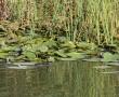 Imagini Delta Dunarii 10