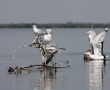 Imagini Delta Dunarii 6