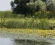 Imagini Delta Dunarii 39