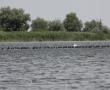 Imagini Delta Dunarii 38