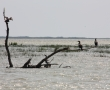Imagini Delta Dunarii 2