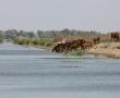 Imagini Delta Dunarii 21