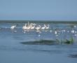 Imagini Delta Dunarii 17